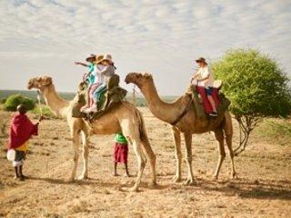 We can help organise camel safaris