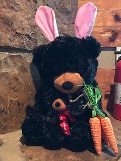 black bears dressed for the season