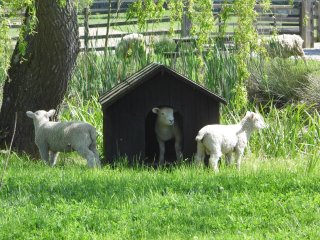 Green Farm Barn