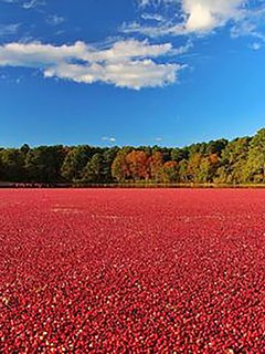 cranberry bog outside of our home