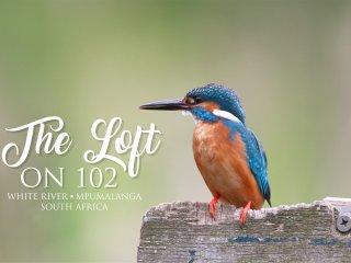 The Loft on 102, White River