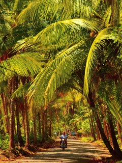 Bejuco not only has a palm lined beach but also a palm lined beach road