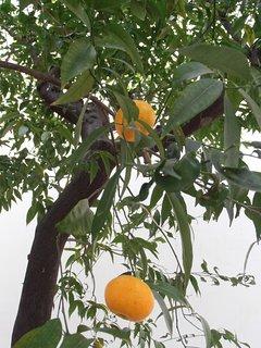 i frutti del giardino