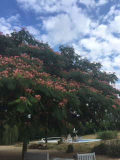 trees over seated area covered in pink flowers in the summer.