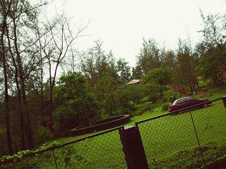 Whispering woods Amba