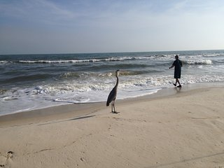BEACH Across Street! Thanksgiving-$1570! Booking November & December!