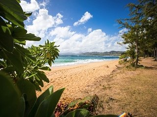 Coconut Beach. Kapaa Condo 1 Bedroom 1 Bath Full Kitchen. Close to Shopping