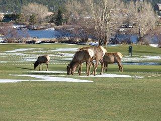 Walk to Downtown Estes - Rocky Mountain Serenity, Estes Park