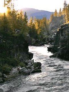 El Bosque River