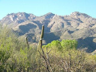 Wake up to the morning sun beaming off the Catalina Mountains!