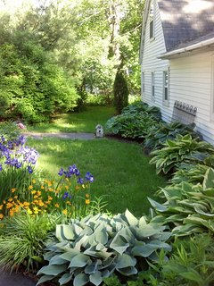 Side yard hosta garden.
