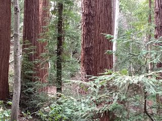 The Getaway in the Redwoods - Spectacular Forest Floor Views