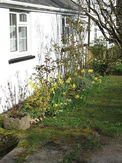 Spring flowers in front garden