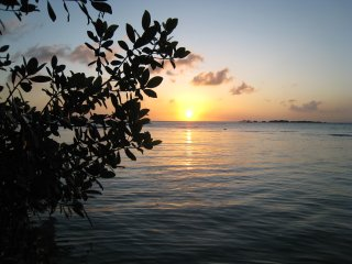 Sunset near the mangrove trees right in front