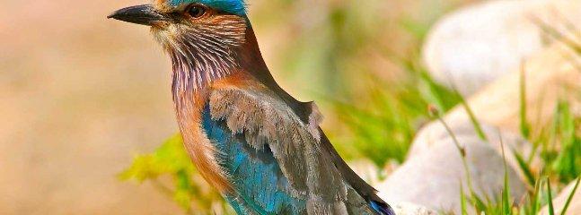Get some amazing shots of rare Himalayan birds
