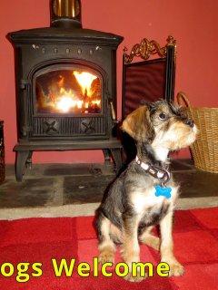 Woodside welcomes dogs