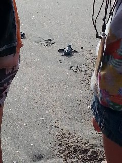 Turtle Release at Kuta Beach - walking distance from Villa