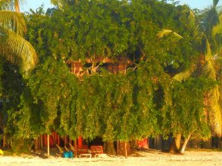 Treehouse, on beautiful beach, sea view Airport 5 minutes walk!