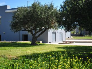 Villa Marmelada is surrounded by beautiful  olive trees in a garden with fruits,