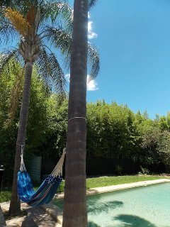 Laze around the pool in a hammock between the giant palm trees.