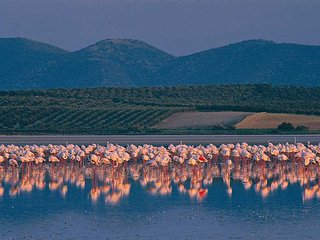 Flamingo Park Chalet, Antequera,Fuente de Piedra, Andalusia, Malaga.