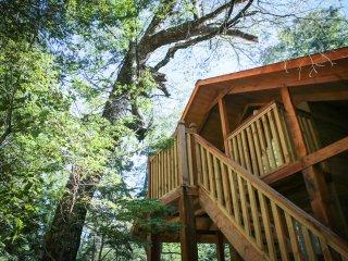 LLaima Camp, Habitacion doble a 4 km. del  Parque Nacional Conguillio