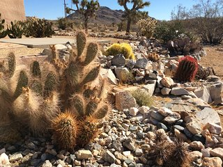 Big Views Over Joshua Tree,  2 Houses, 1 lot, perfect for couples and families.