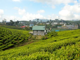 Sarah Cottage - Tranquility midst Tea Fields, Nuwara Eliya