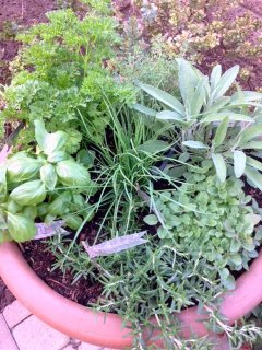 Fresh Herbs for your home cooked meals!