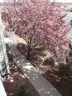 April Color