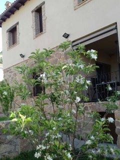 Nuestro pequeño Manzano florecido