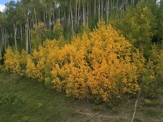 ASPEN IN THE SUMMER and FALL!!!!  OWNER IS MANAGER!!!, Aspen