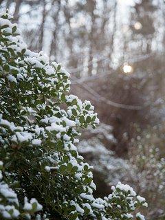 Light snow in the winter