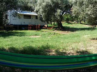 Motorhome under shade of olive groove. Sea 350 mt