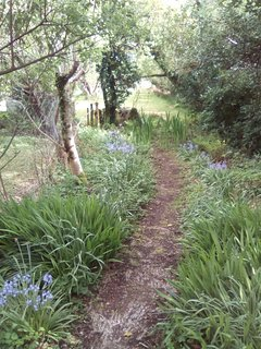 Bluebell lined path to the cabin