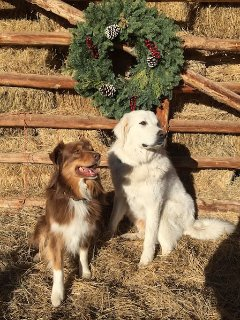 Double Shot and Mist - our Ranch Dogs