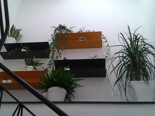 Casa Zafarani, Timo...