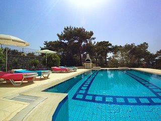 Pool view with pine trees and all-day sun