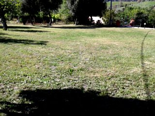 Parco della villa con ulivi antichi e prato inglese