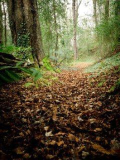 Trail At Ardmore