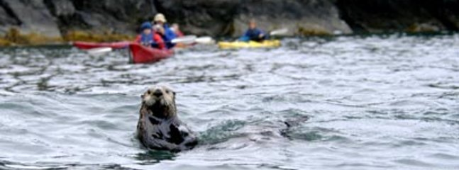 Kayak Kachemak bay to see sealife and amazing bays and rock formations