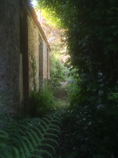 Path past the pig sty down to the old privy (no longer in use!).
