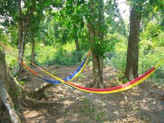 Backyard with hammocks under forest canopy