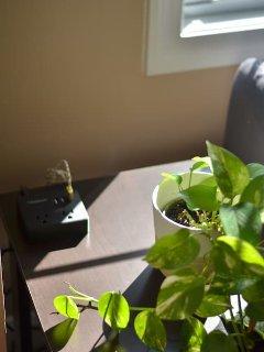Sunlight illuminated money plant will surely brighten up your day