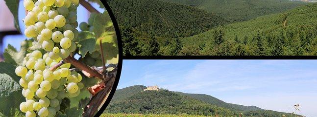 Wunderschöne Landschaft in der Pfalz