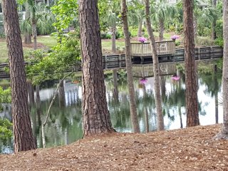 Palmetto Dunes Ranch-Lagoon View, Short Walk to Beach