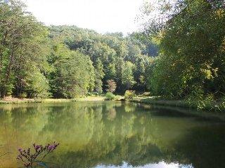 Pond Behind Cabin