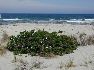 Beach ligt aan de overkant van de straat en op steenworp afstand. GRATIS strand badges. Grote besparingen!