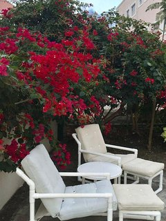 sit under the cool Bougainvillea shade and just chill!
