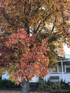 Autumn in Ballarat